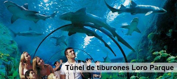 Acuario_tiburones_Loro_Parque_Tenerife