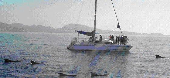 Visita a ballenas en Tenerife