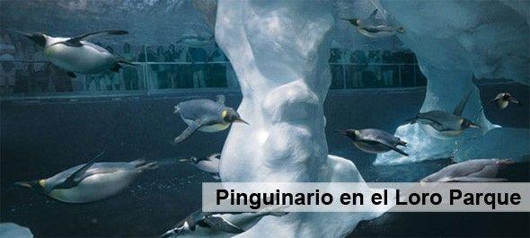 Pinguinos_Loro_Parque_Tenerife