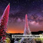 Los Tajinastes del Teide – Tenerife